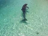 Дельфины на о.Кайо-Ларго Куба.